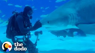 Wild Shark Recognizes Human Best Friend After They Were Separated For A Year  | The Dodo Soulmates