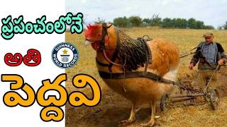 Biggest Animals In The World In Telugu || ప్రపంచంలోనే అతిపెద్ద జంతువులు || abbas T.V