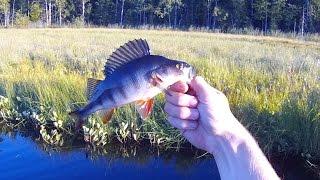 Рыбалка в Карелии. Ловля окуня на спиннинг.(Рыбалка Летом Ловля окуня на спиннинг fishing 2015 На вертушки брал плохо, ловил на джиг. Советую так же посмотре..., 2015-07-13T13:13:35.000Z)