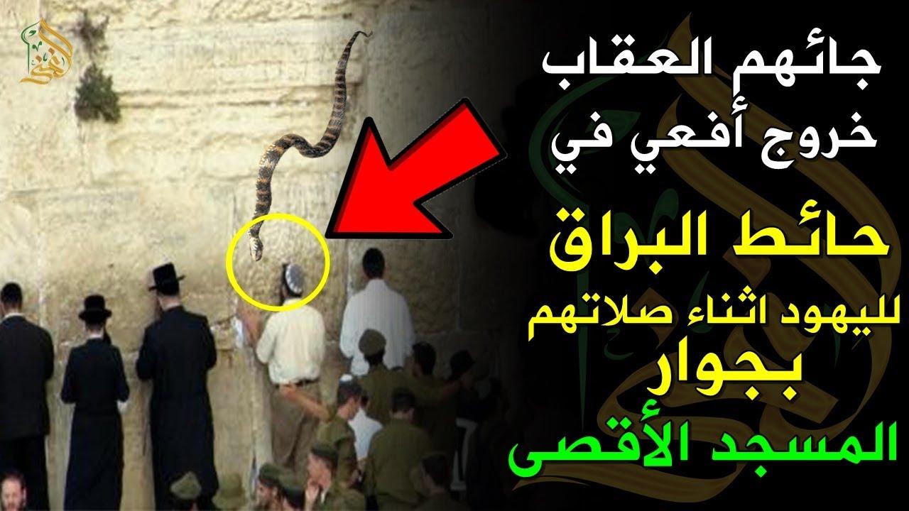 جائهم العقاب ..خروج أفعي في حائط البراق (المبكي) لليهود اثناء صلاتهم بجوار المسجد الاقصي