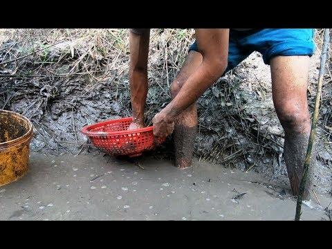 Bắt cá trong mương - đi chung Cà Rốt | SBNN miền tây 258