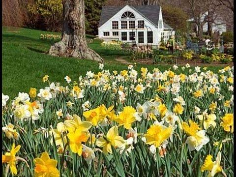 Hydrangeas _ White Flower Farm