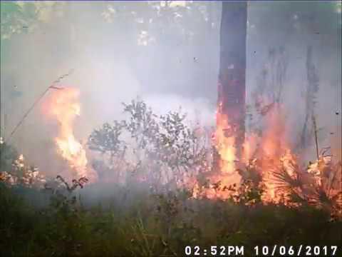 Game camera catches wildfire in Chasahowitzka WMA |