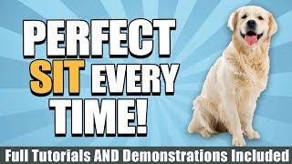 How To Train Your Dog To Sit With Tutorials, Demonstrations, And More!