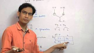 Mendelian Genetics  monohybrid cross & laws of mendel for AIPMT,AIIMS,WBJEE,BHU