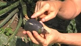 Széles gyógymód paraziták ellen, Plant E Giardinophyt Solution 30ml, Bélférgek és paraziták