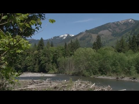 Dean Evenson How to 'Just Be' - Beautiful Summer Nature Video Pacific Northwest