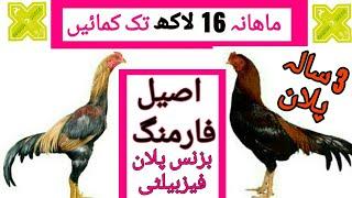 اصیل مرغ فارمنگ 16 لاکھ ماھانہ أمدنی مکمل بزنس پلان Aseel Farming Business Plan Feasibility in Urdu