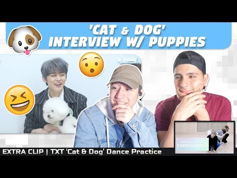 nsd-react-to-txt-'cat-&-dog'-interview-w/-puppies-|-extra-clip:-'cat-&-dog'-dance-practice