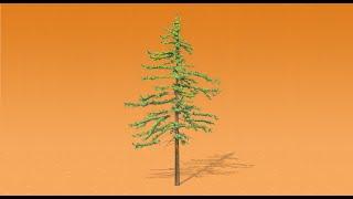 A conversation with: Marko – Douglas fir