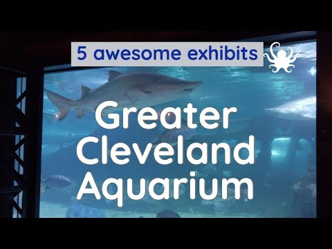 Greater Cleveland Aquarium - 5 Exhibits You Should See
