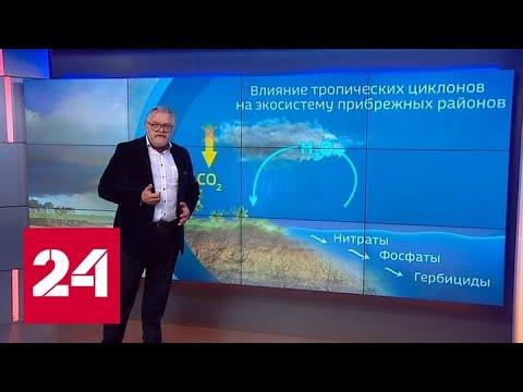 В Тихом океане заметили каплю-убийцу - Россия 24