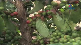 First Coffee Mill in Kericho County to be put up at Fort Tenan