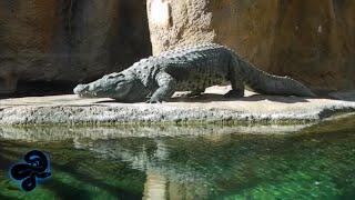San Antonio Zoo   February 2016