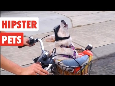 Hipster Pets | Funny Pet Video Compilation 2017