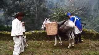El ejercito Realistas sitia San Juan Coscomatepec en 1813