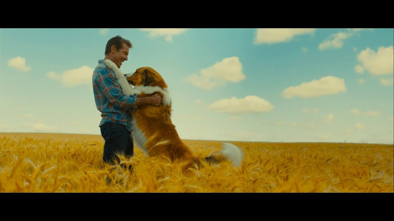 ŠUNS TIKSLAS 2 / Dog's Journey (2019) lietuviškai dubliuoto filmo anonsas