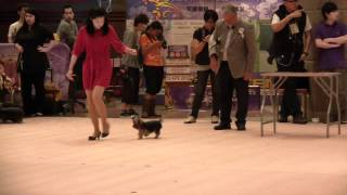 15 April 2012 175  Hk Kennel Club Dog Show Yorkshire Terrier.mp4