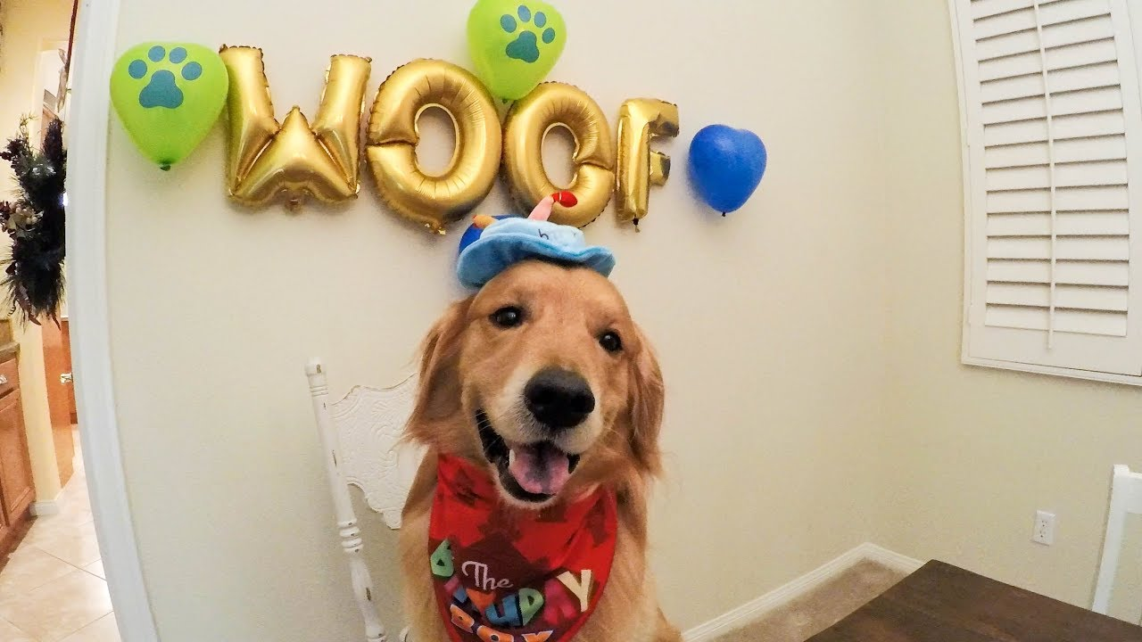 Oshie S Awesome Birthday Dog Beach Golden Retriever Vlog Youtube