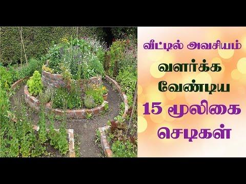 15 herbal plants to grow at home in tamil | வீட்டில் வளர்க்க வேண்டிய 15 மூலிகை செடிகள்