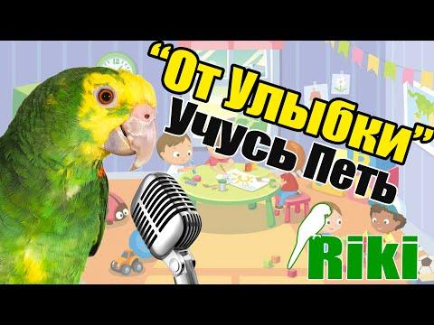 """Ручной попугай Амазон поет """"От Улыбки"""" и разговаривает!"""