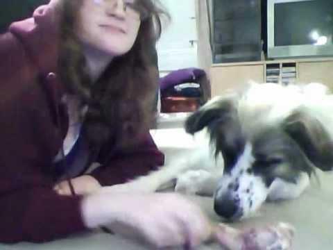 non-aggressive-dog-shares-her-bone