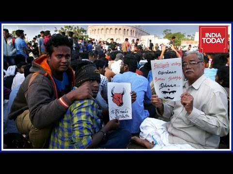 Tamil People Pour Into Marina Beach Protesting Against Jallikattu Ban
