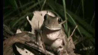 Rain Frogs # 2