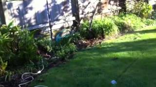 Cat scaring sprinkler!!!