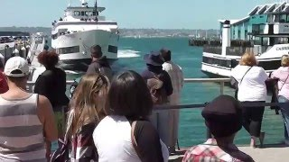 Van whale watching naar boat crashing in San Diego