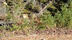 Cougar sighting in New Brunswick