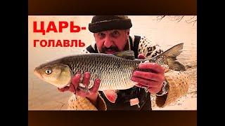 Рыбалка Две ночи на Реке Царь Голавль 2кг Копченая Щука Моя подруга Афина