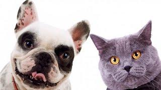 Опять шоу ! Интересные факты о домашних животных