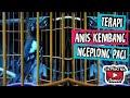 Anis Kembang Ngeplong Pagi Ngebren(.mp3 .mp4) Mp3 - Mp4 Download