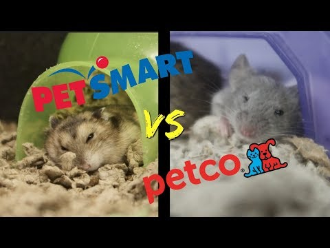 PETSMART Vs PETCO | Who Has Better SMALL ANIMAL Care?
