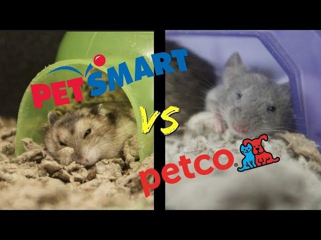 Petsmart Vs Petco Who Has Better Small Animal Care Youtube