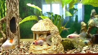 Новый аквариум за 5200 на 75 л.   Золотые рыбки  Запуск аквариума  Посылочка.