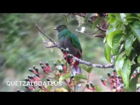 Quetzal Short Documentary
