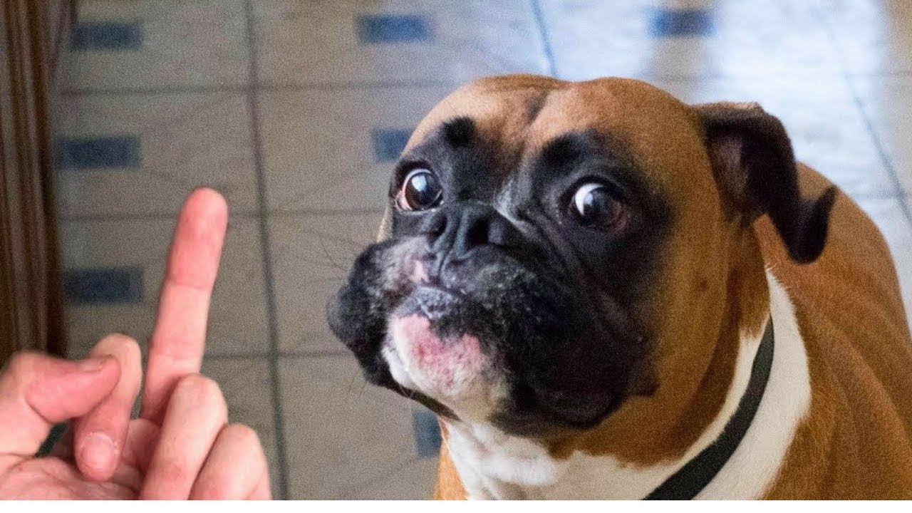 Cats And Dogs Do Not Like The Middle Finger