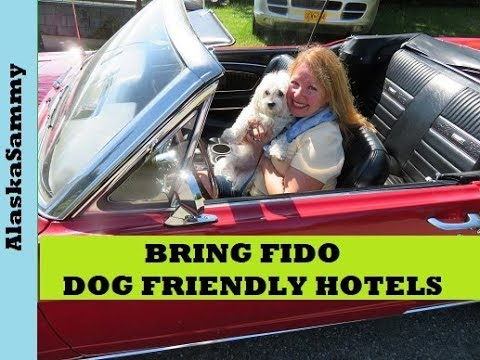 Bring Fido Dog Friendly Hotels Restaurants Activities Events