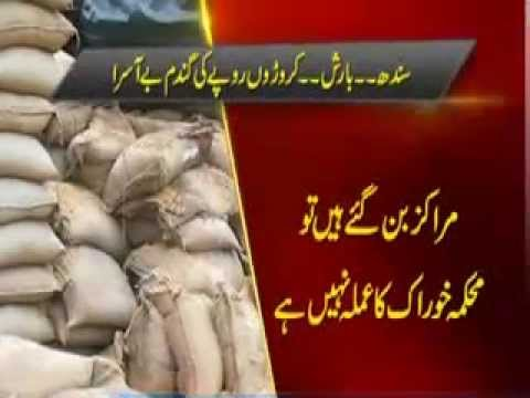 Sindh wheat growers distressed over delay in procurement
