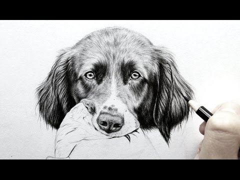 How to draw realistic fur - dog ears[Real time] | Leontine van vliet