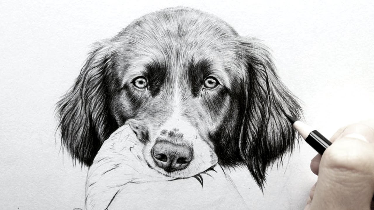 How to draw realistic fur dog earsreal time leontine van vliet
