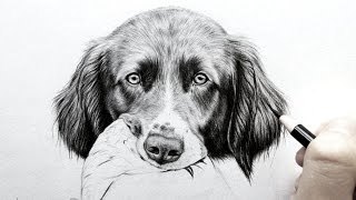 How to draw realistic fur - dog ears[Real time]   Leontine van vliet