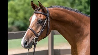 How to Correctly Lunge Your Horse // Horse Training Tips with Deanna Corby Dressage