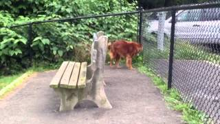 Incredible Dog Training Connecticut -  Training Boarding Connecticut