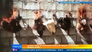 На выставке во Франции показали видео сожжения живых кур