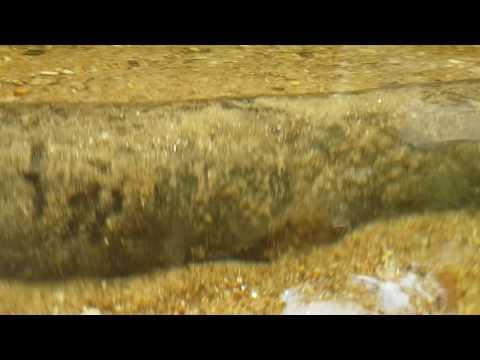 Underwater recording with Samsung S7 Edge, Malaysia, Sedim river, May 29, 2016