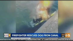 VIDEO: Glendale FD rescues small dog trapped in canal
