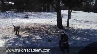 Pack Aggression | Majors Academy Dog Training And Rehabilitation